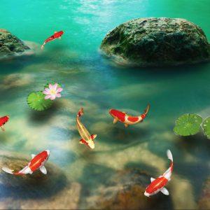 Tranh dán tường 3D cá koi nhật